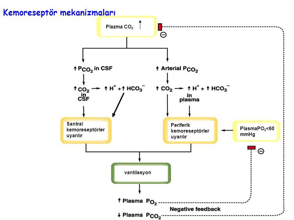 Kemoreseptör mekanizmaları