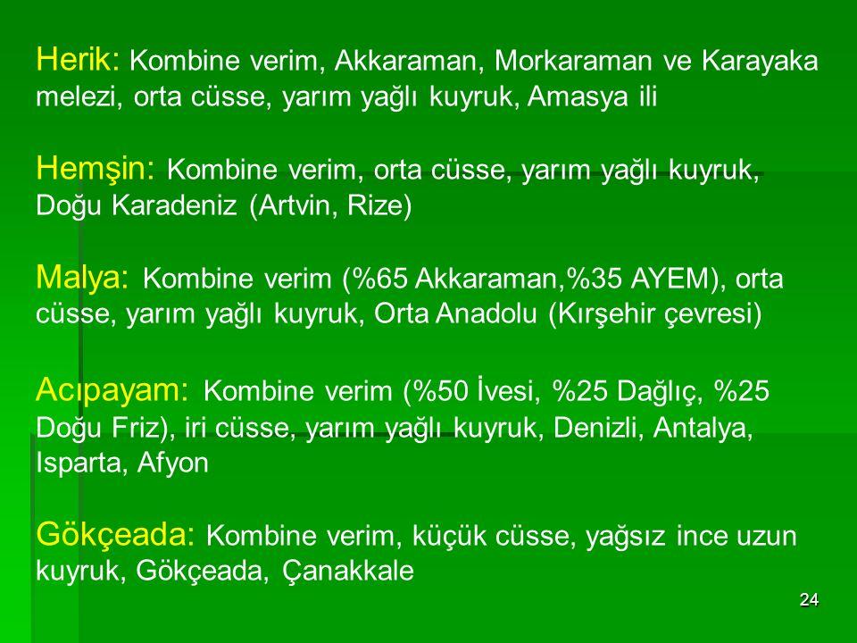 Herik: Kombine verim, Akkaraman, Morkaraman ve Karayaka melezi, orta cüsse, yarım yağlı kuyruk, Amasya ili