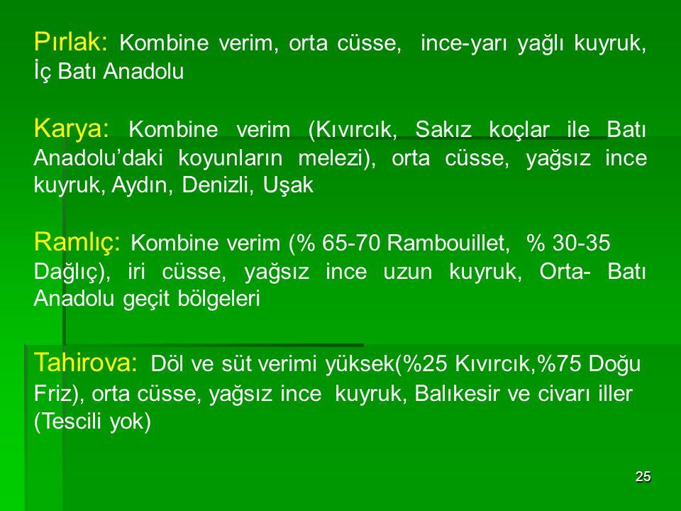 Ramlıç: Kombine verim (% 65-70 Rambouillet, % 30-35