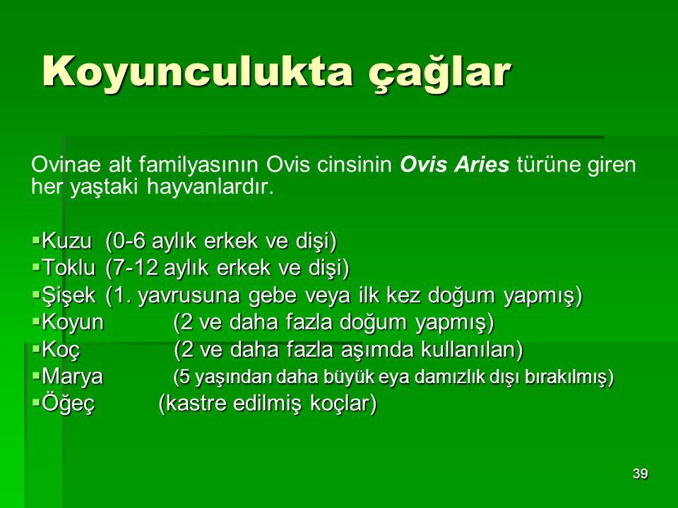 Koyunculukta çağlar Ovinae alt familyasının Ovis cinsinin Ovis Aries türüne giren her yaştaki hayvanlardır.