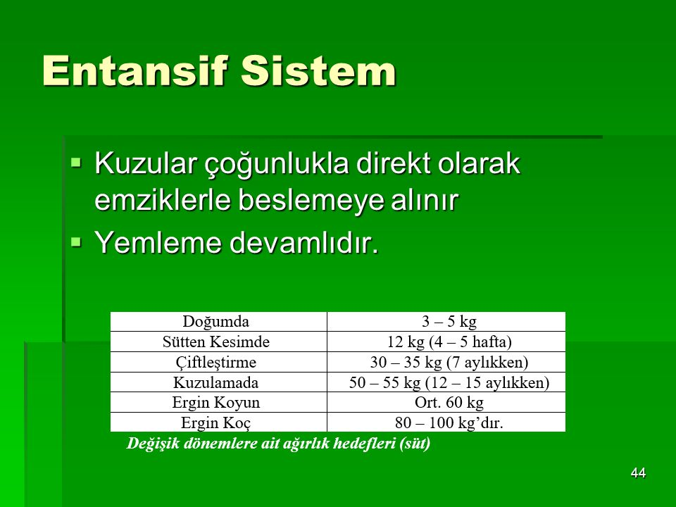 Entansif Sistem Kuzular çoğunlukla direkt olarak emziklerle beslemeye alınır.