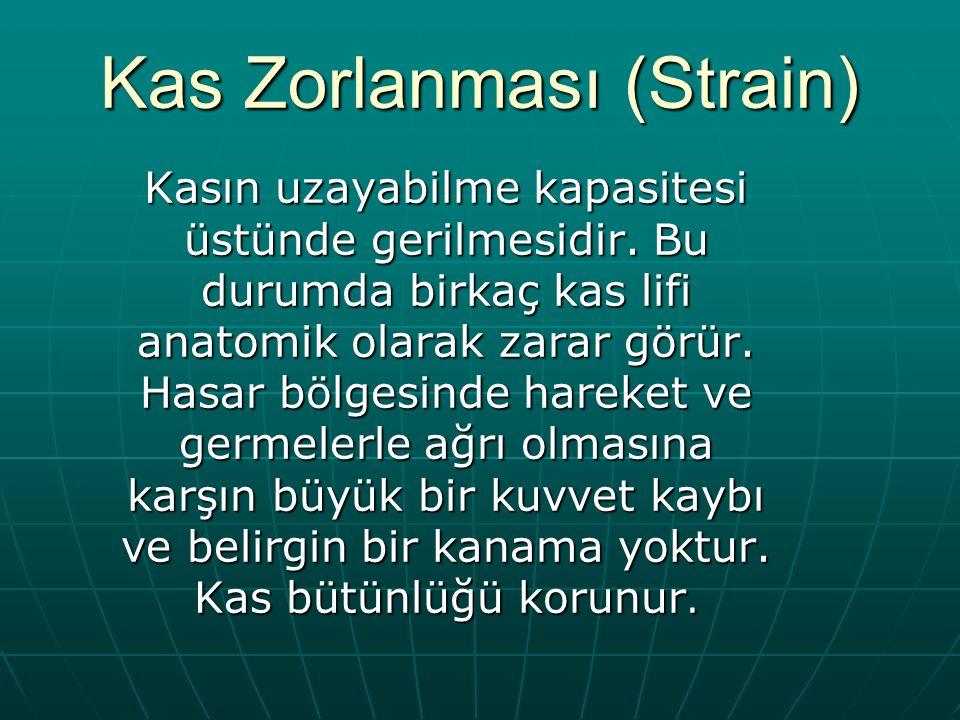Kas Zorlanması (Strain)