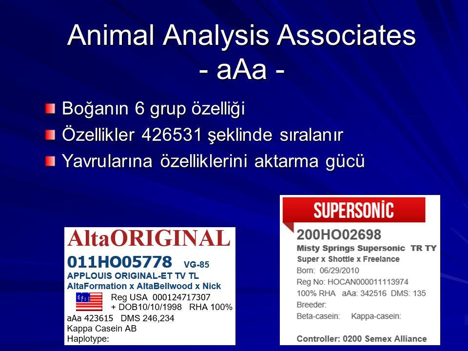 Animal Analysis Associates - aAa -