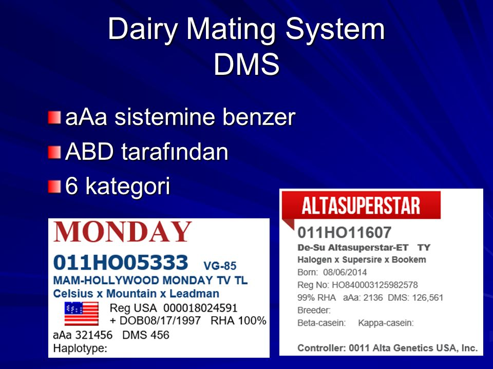 Dairy Mating System DMS