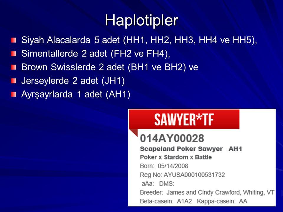 Haplotipler Siyah Alacalarda 5 adet (HH1, HH2, HH3, HH4 ve HH5),