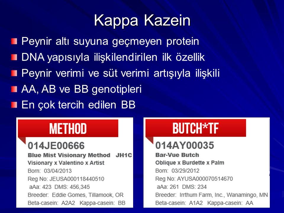 Kappa Kazein Peynir altı suyuna geçmeyen protein