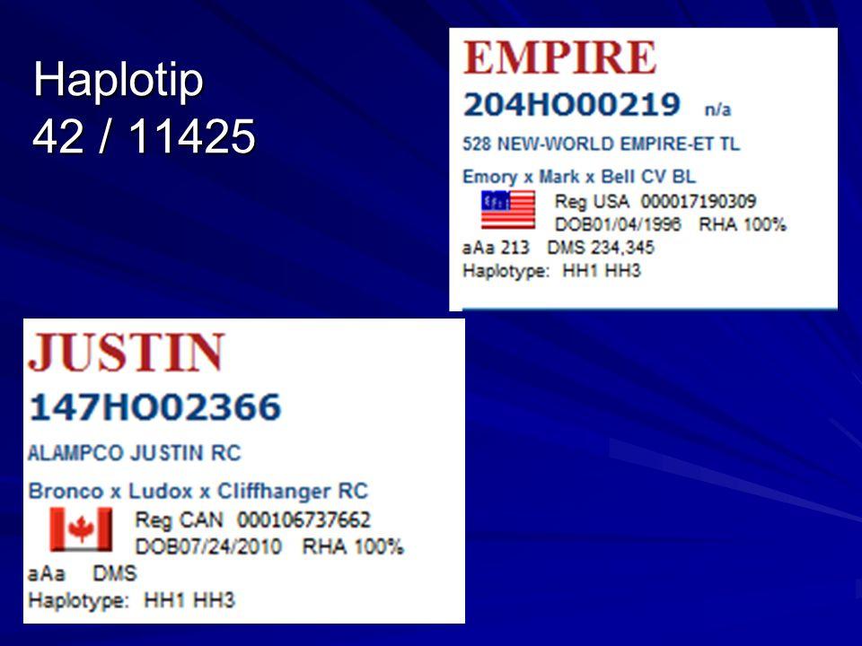 Haplotip 42 / 11425