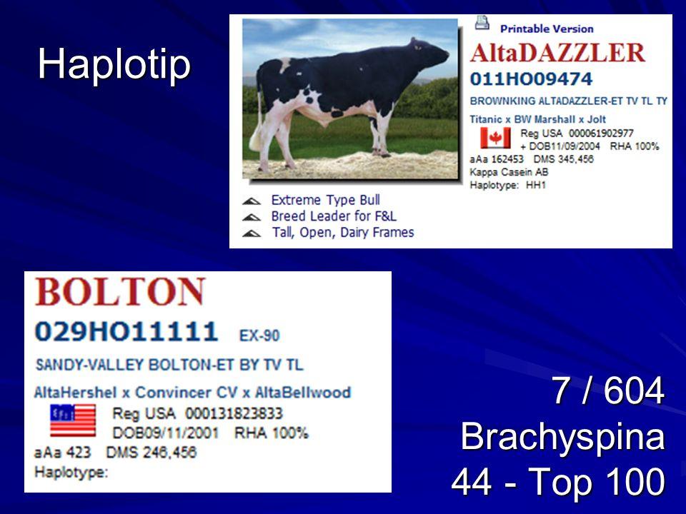 Haplotip 7 / 604 Brachyspina 44 - Top 100