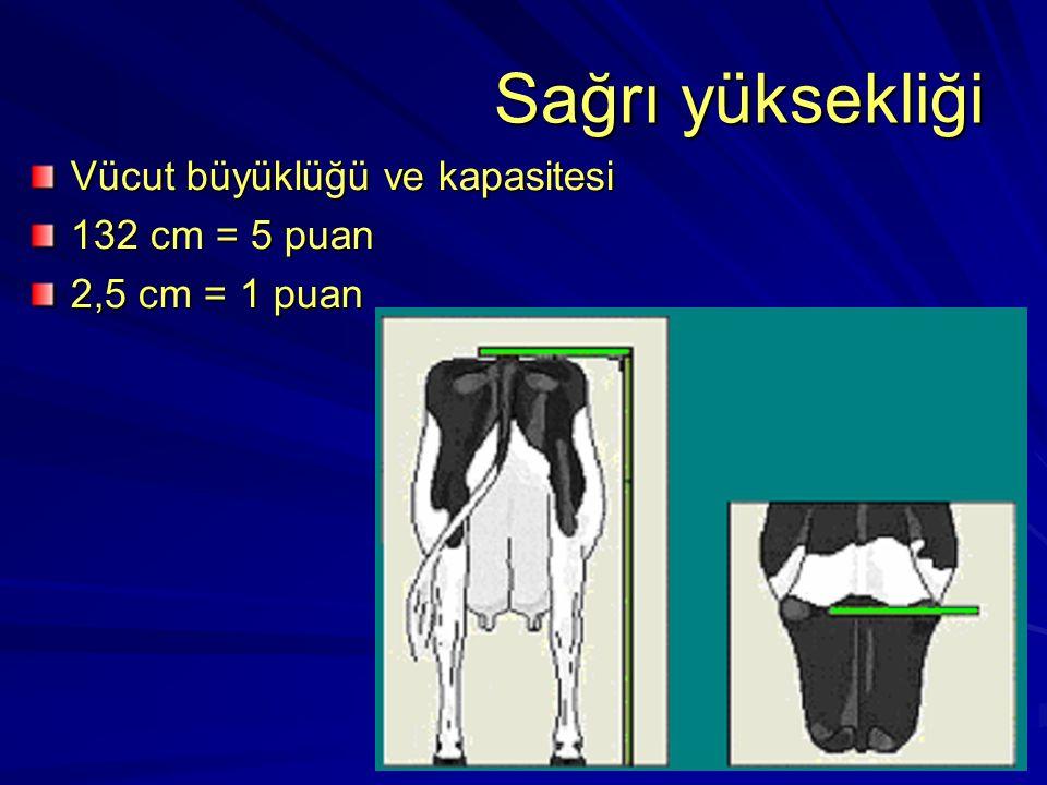 Sağrı yüksekliği Vücut büyüklüğü ve kapasitesi 132 cm = 5 puan