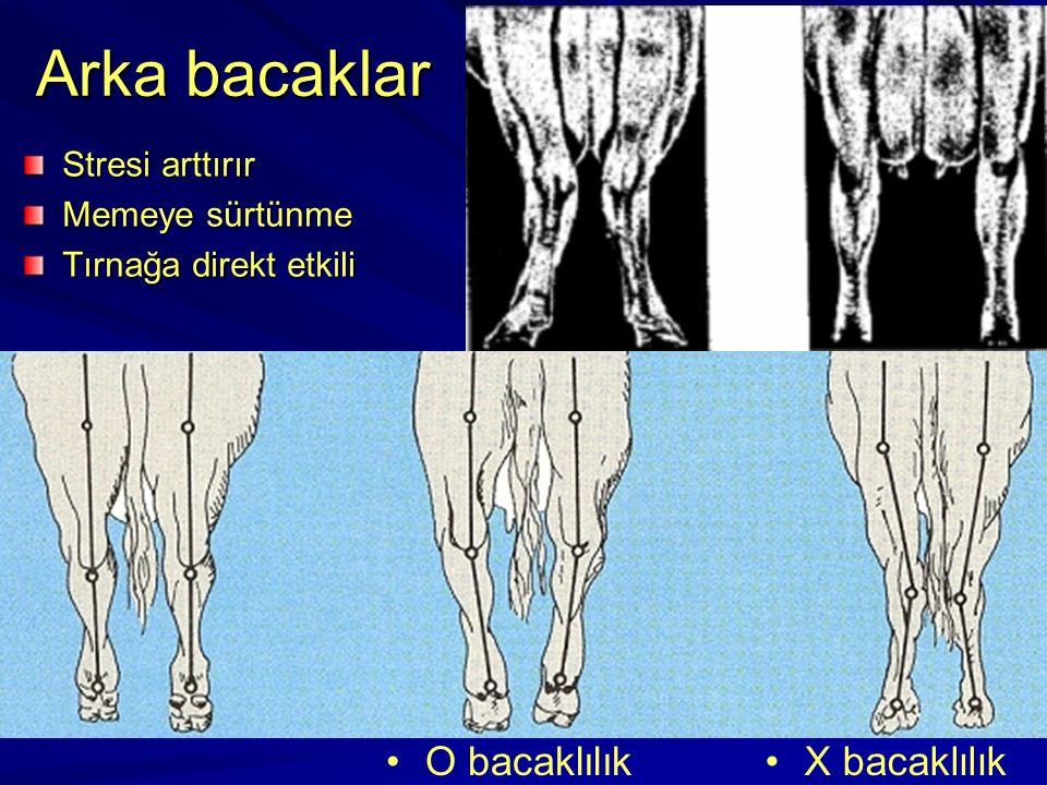 Arka bacaklar O bacaklılık X bacaklılık Stresi arttırır