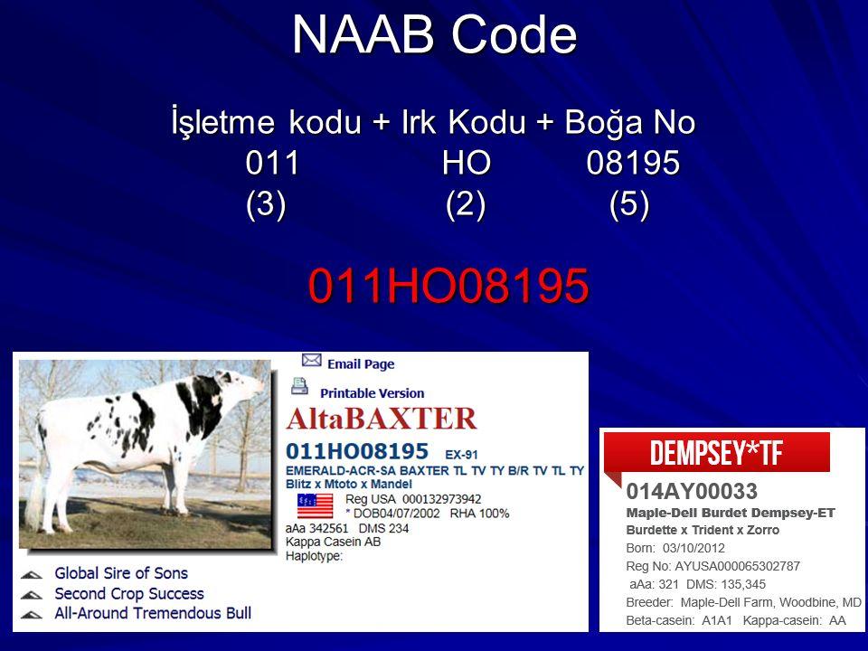 NAAB Code 011HO08195 İşletme kodu + Irk Kodu + Boğa No 011 HO 08195
