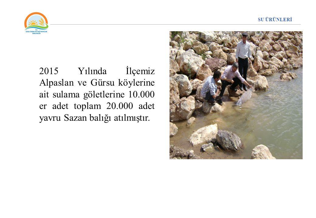 SU ÜRÜNLERİ 2015 Yılında İlçemiz Alpaslan ve Gürsu köylerine ait sulama göletlerine 10.000 er adet toplam 20.000 adet yavru Sazan balığı atılmıştır.