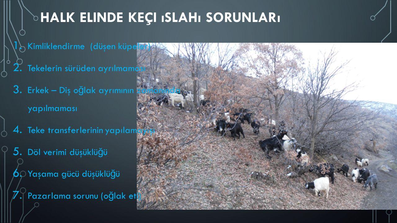 Halk elinde keçi ıslahı sorunları