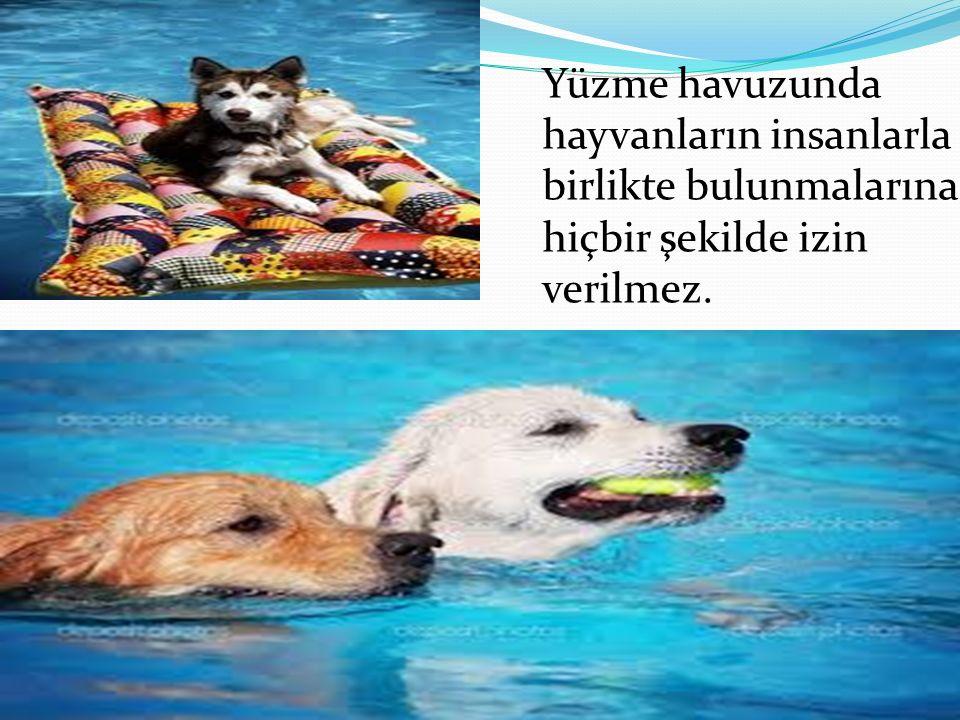 Yüzme havuzunda hayvanların insanlarla birlikte bulunmalarına hiçbir şekilde izin verilmez.