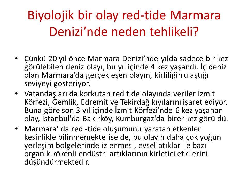 Biyolojik bir olay red-tide Marmara Denizi'nde neden tehlikeli