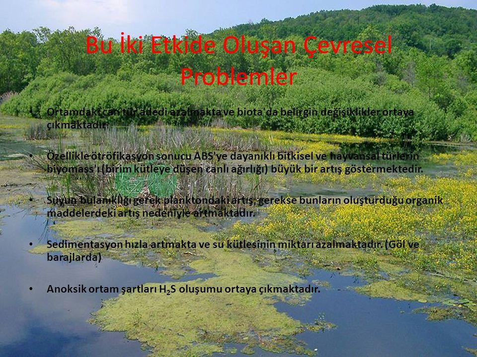 Bu İki Etkide Oluşan Çevresel Problemler