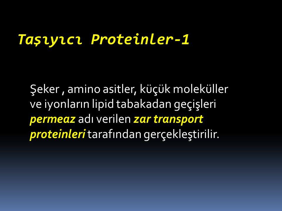 Taşıyıcı Proteinler-1