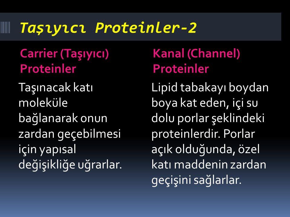 Taşıyıcı Proteinler-2 Carrier (Taşıyıcı) Proteinler