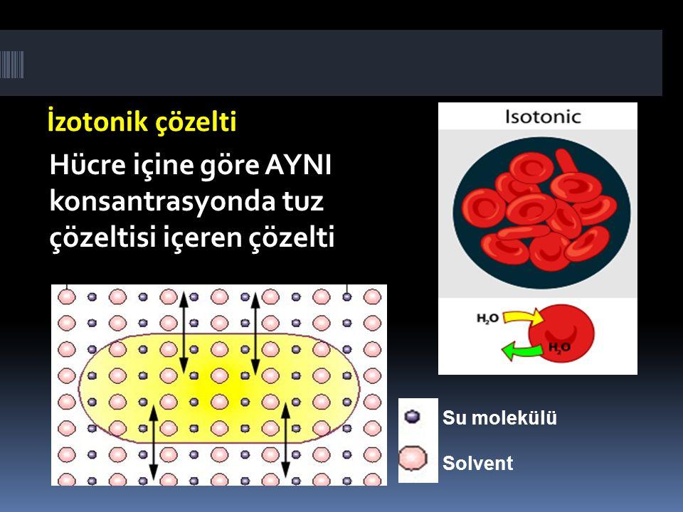 İzotonik çözelti Hücre içine göre AYNI konsantrasyonda tuz çözeltisi içeren çözelti. Su molekülü.