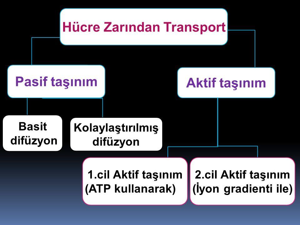 Hücre Zarından Transport