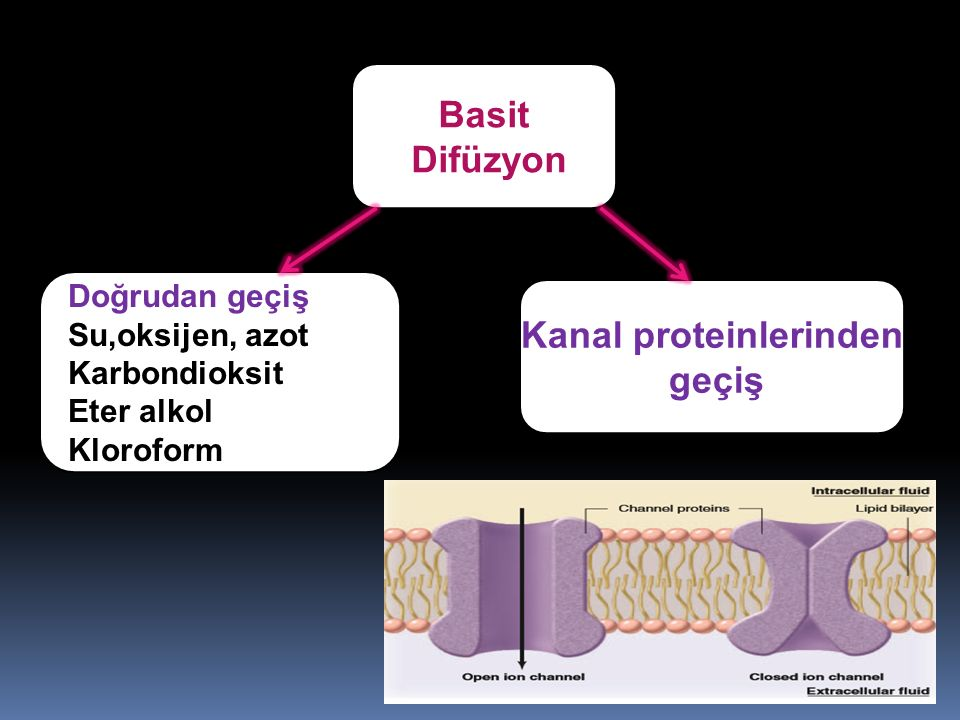 Kanal proteinlerinden