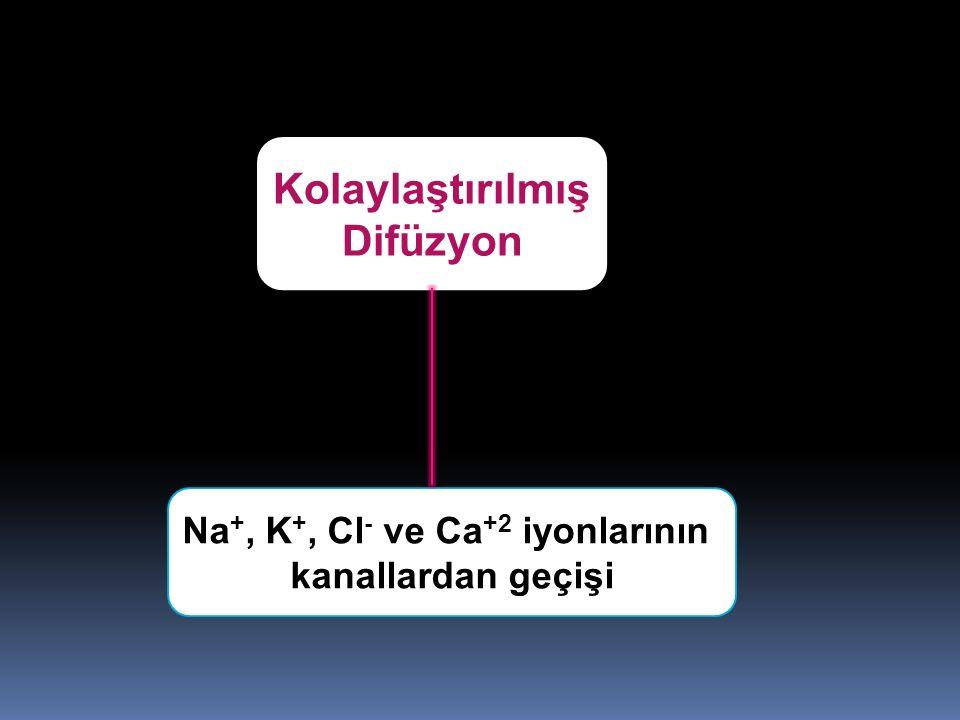 Na+, K+, Cl- ve Ca+2 iyonlarının