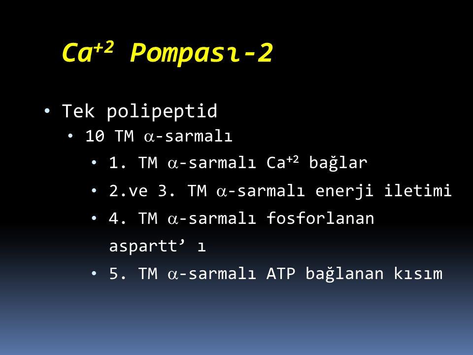 Tek polipeptid Ca+2 Pompası-2 10 TM -sarmalı