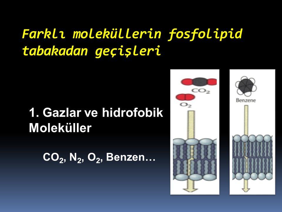 Farklı moleküllerin fosfolipid tabakadan geçişleri