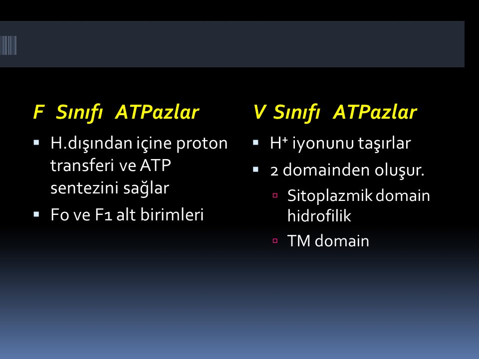 F Sınıfı ATPazlar V Sınıfı ATPazlar