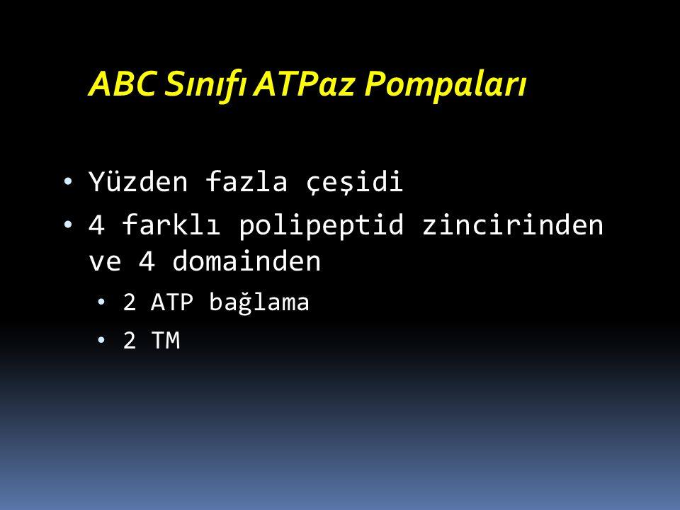 ABC Sınıfı ATPaz Pompaları