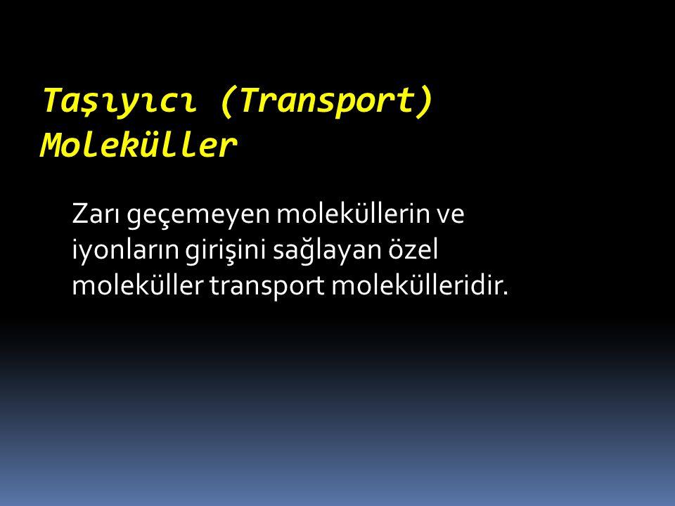 Taşıyıcı (Transport) Moleküller