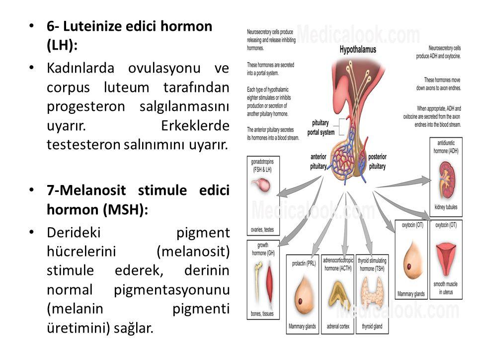 6- Luteinize edici hormon (LH):