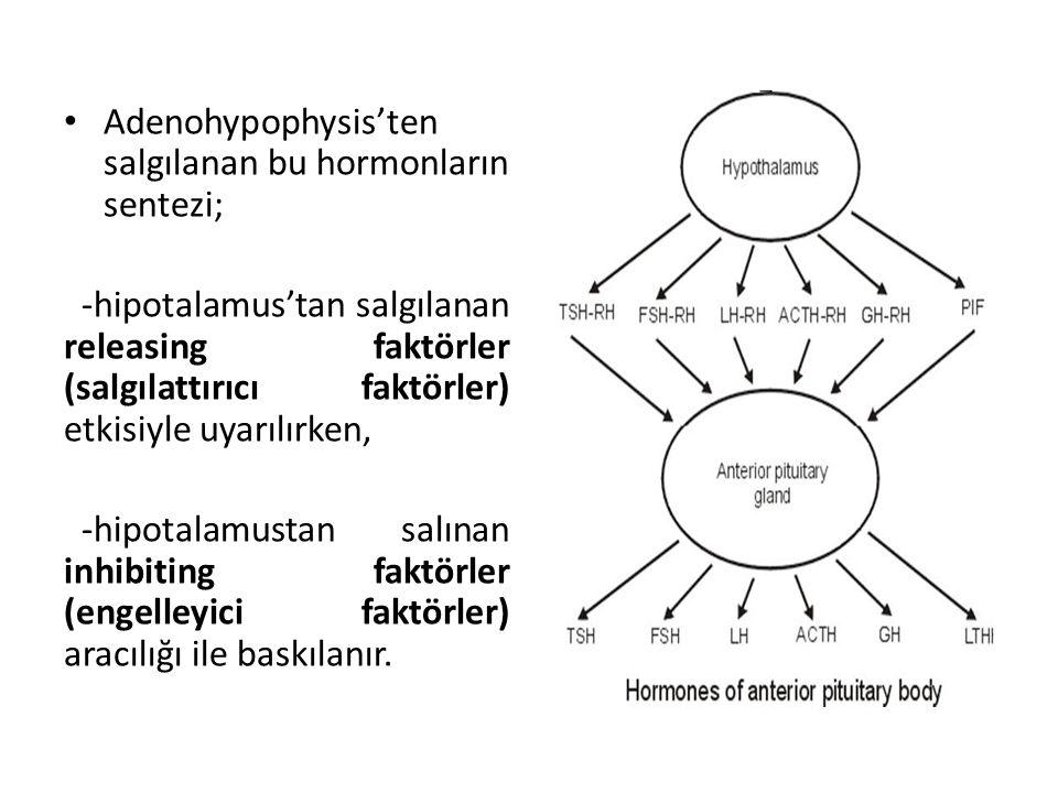 Adenohypophysis'ten salgılanan bu hormonların sentezi;