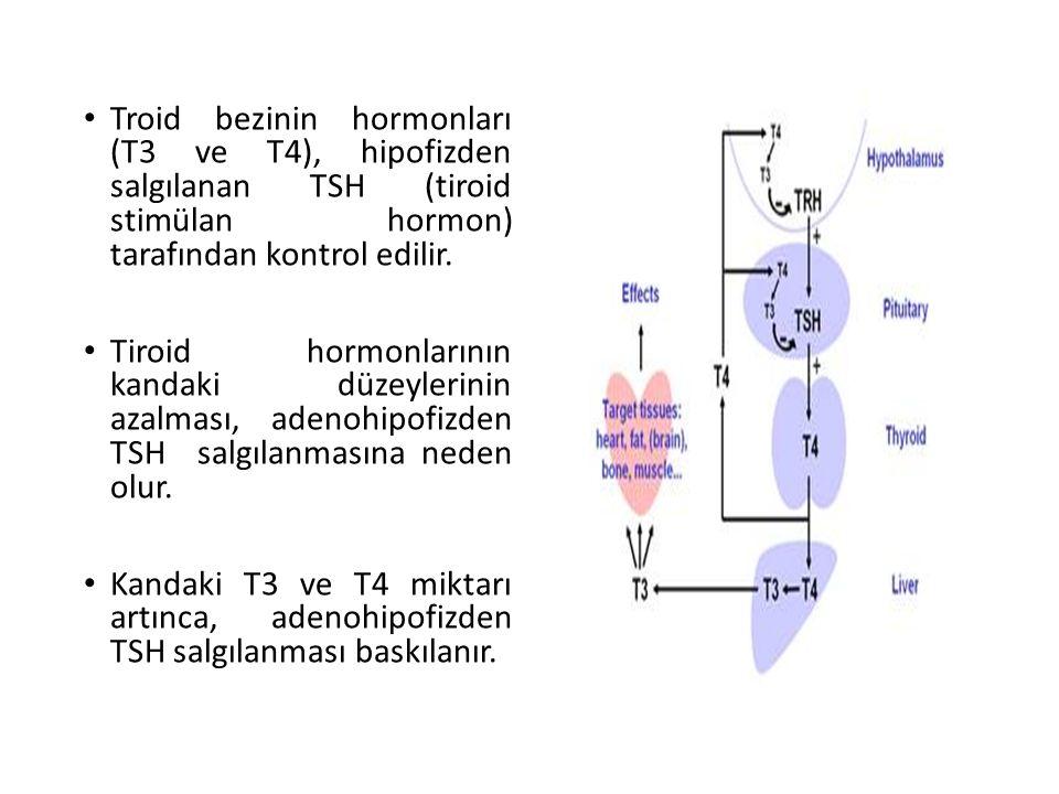 Troid bezinin hormonları (T3 ve T4), hipofizden salgılanan TSH (tiroid stimülan hormon) tarafından kontrol edilir.