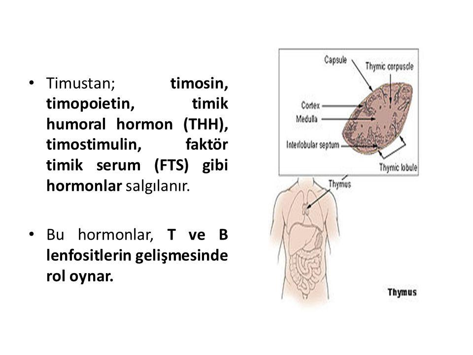 Timustan; timosin, timopoietin, timik humoral hormon (THH), timostimulin, faktör timik serum (FTS) gibi hormonlar salgılanır.