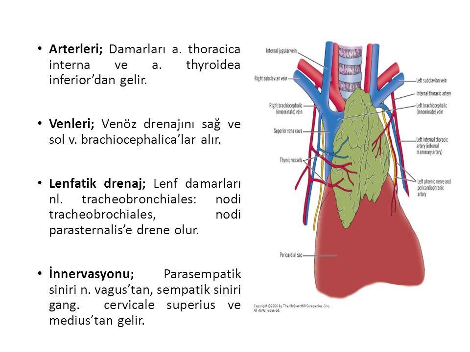 Arterleri; Damarları a. thoracica interna ve a