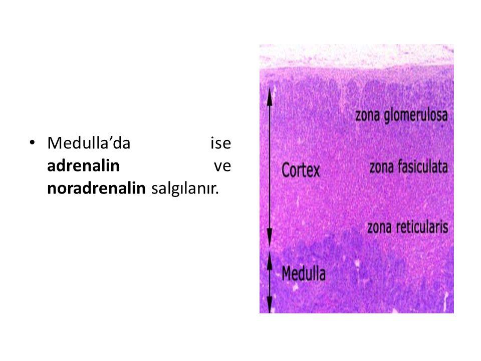 Medulla'da ise adrenalin ve noradrenalin salgılanır.