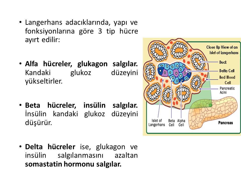 Langerhans adacıklarında, yapı ve fonksiyonlarına göre 3 tip hücre ayırt edilir: