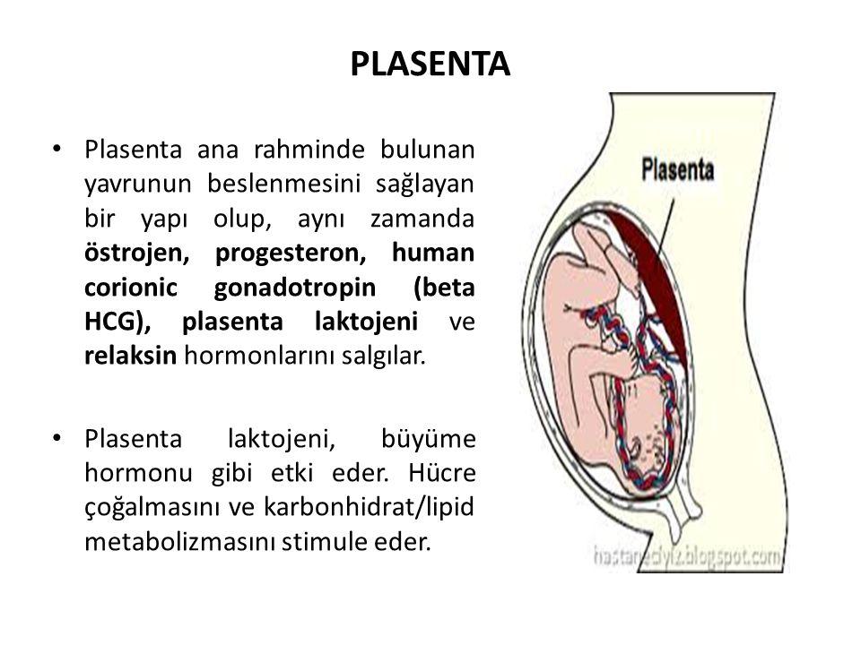 PLASENTA