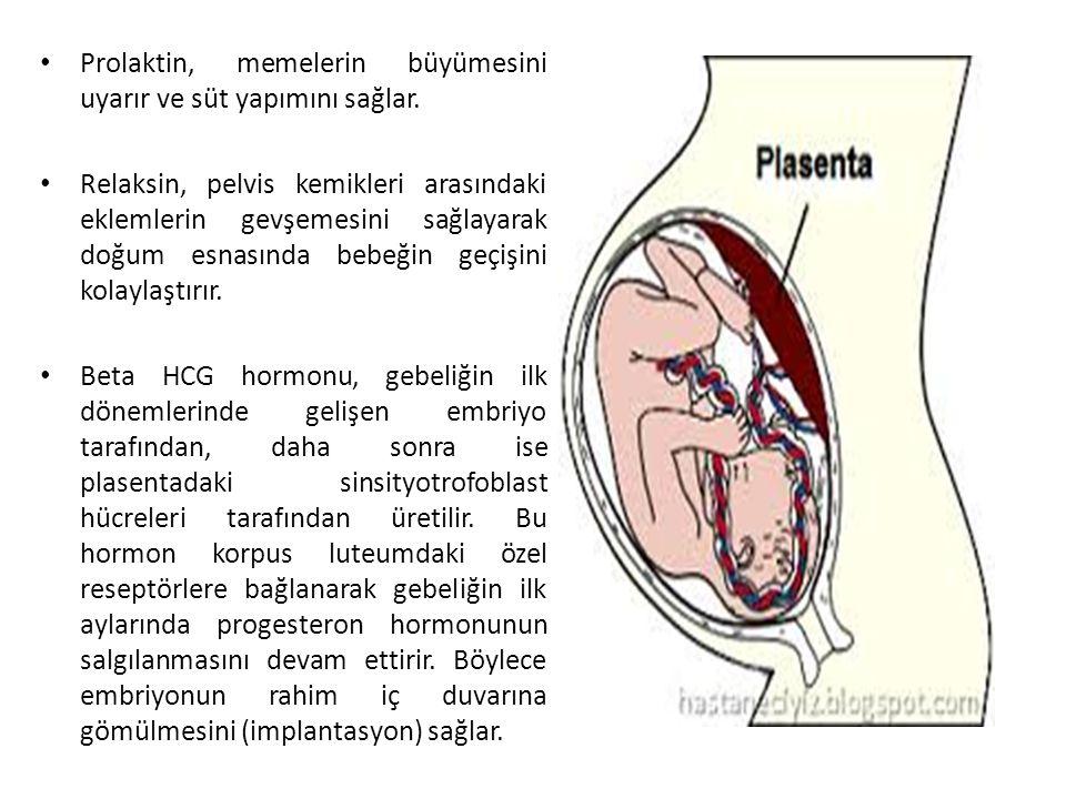 Prolaktin, memelerin büyümesini uyarır ve süt yapımını sağlar.