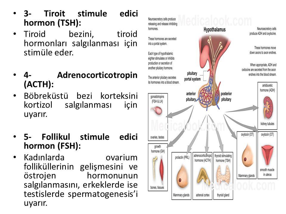 3- Tiroit stimule edici hormon (TSH):