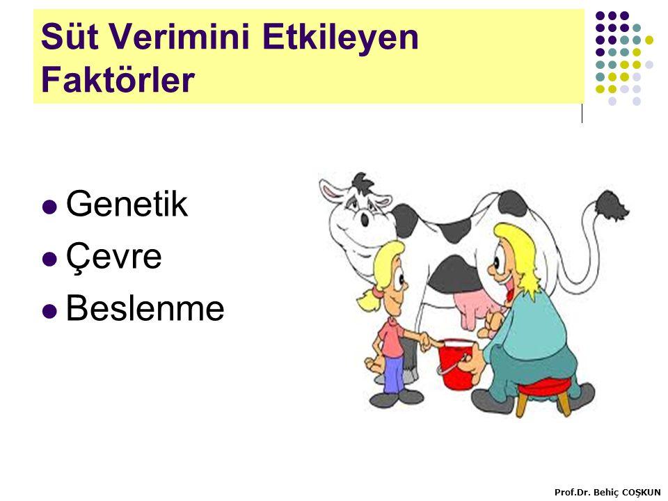 Süt Verimini Etkileyen Faktörler