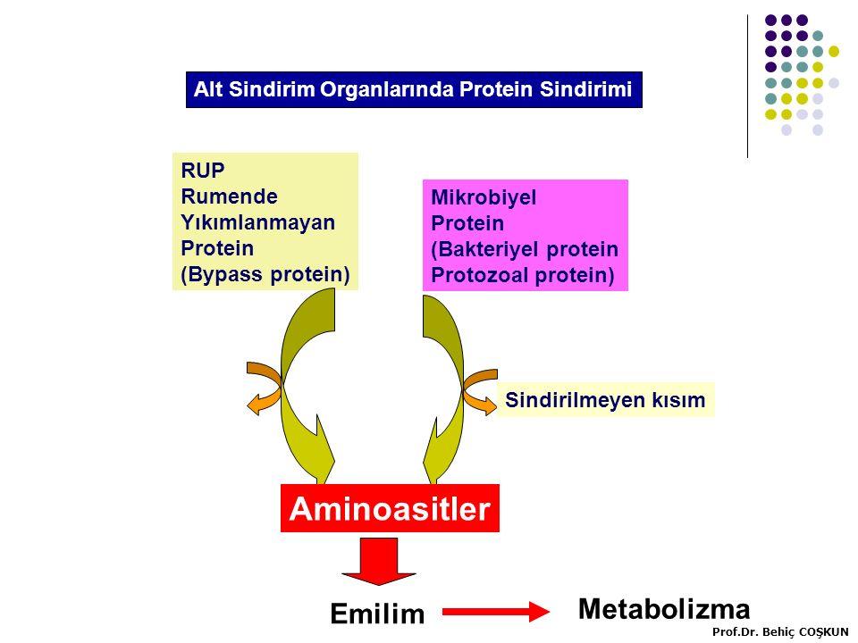 Aminoasitler Metabolizma Emilim