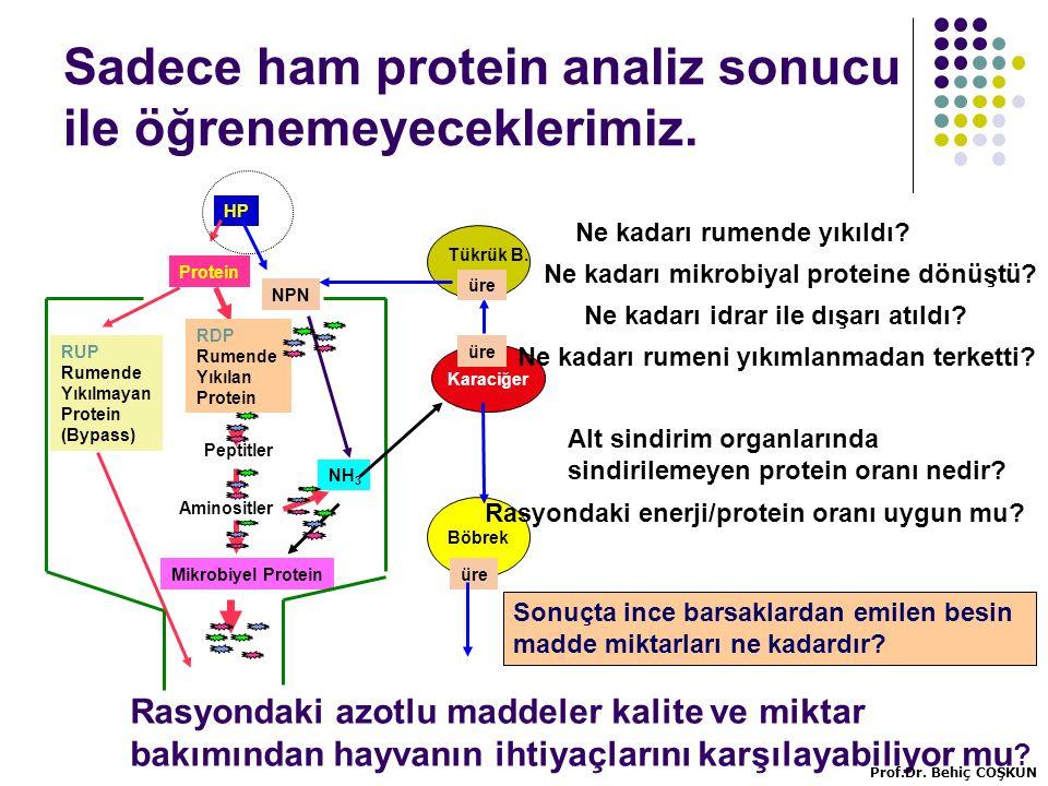 Sadece ham protein analiz sonucu ile öğrenemeyeceklerimiz.