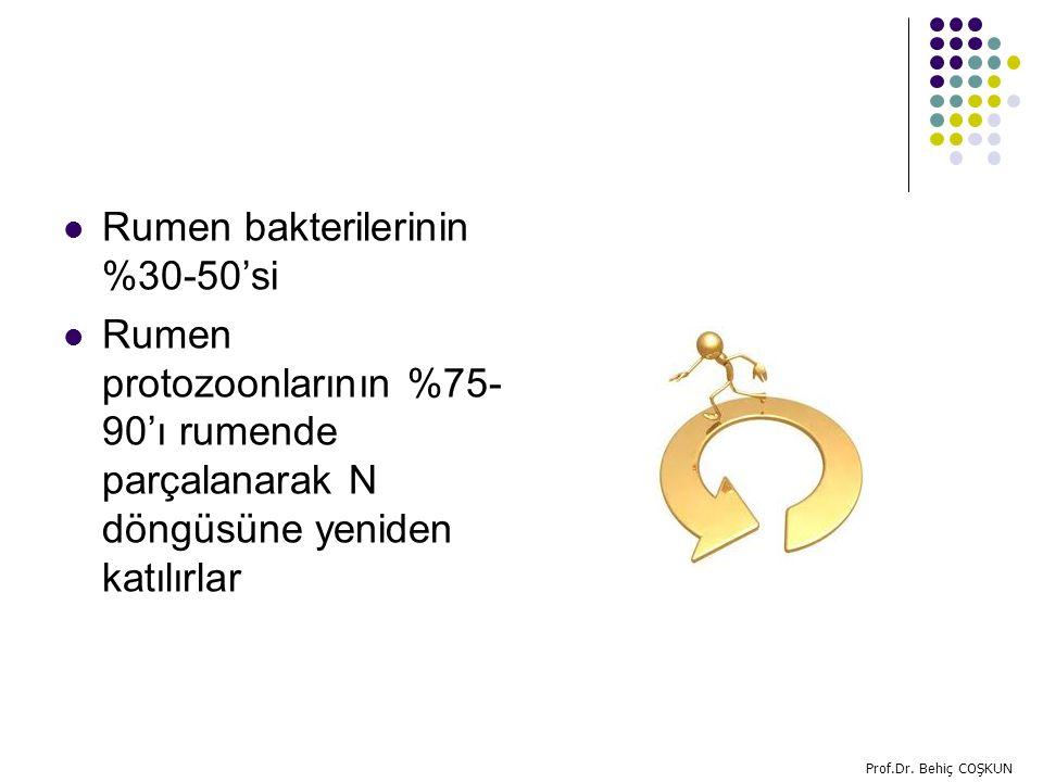 Rumen bakterilerinin %30-50'si