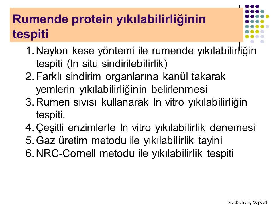 Rumende protein yıkılabilirliğinin tespiti
