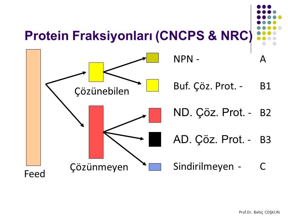 Protein Fraksiyonları (CNCPS & NRC)