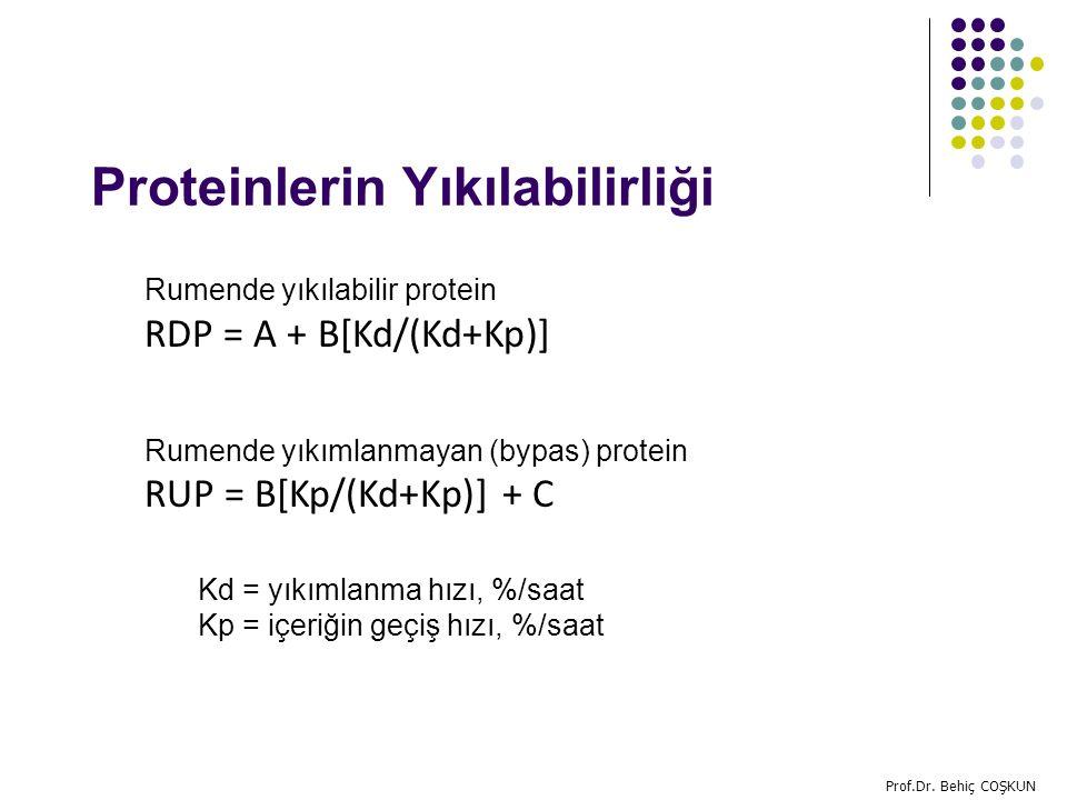 Proteinlerin Yıkılabilirliği