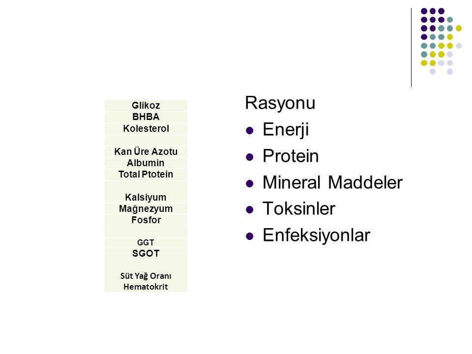 Rasyonu Enerji Protein Mineral Maddeler Toksinler Enfeksiyonlar Glikoz