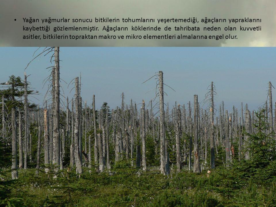 Yağan yağmurlar sonucu bitkilerin tohumlarını yeşertemediği, ağaçların yapraklarını kaybettiği gözlemlenmiştir.